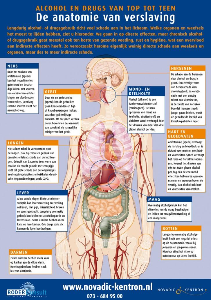 anatomieposter